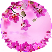 Orchid Spring Flowers Theme