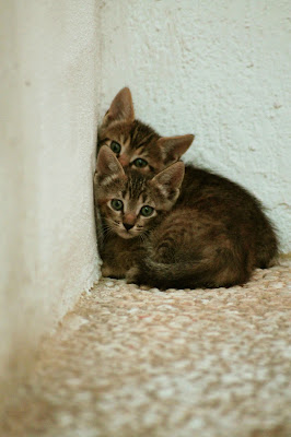 Kitties  di saraoblivion