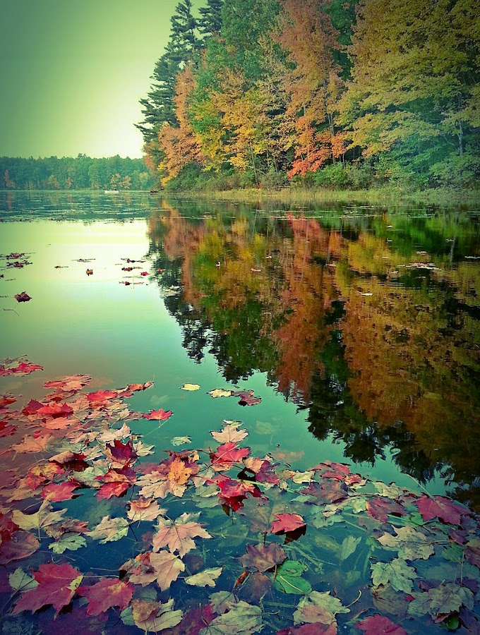 fall color by David Pratt - Landscapes Waterscapes ( water, reflection, color, fall, trees, leves )