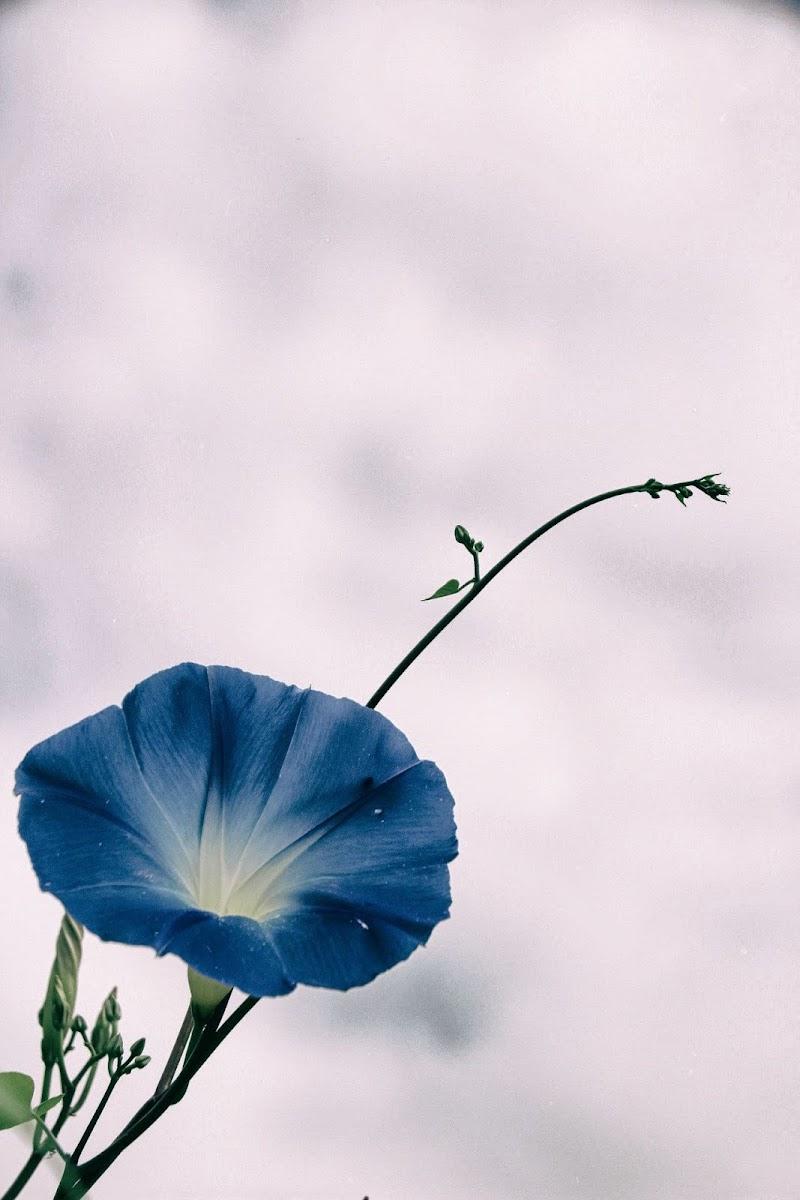 Quando il cielo non è blu, ci pensano i fiori di Ilaz