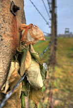 Photo: Auschwitz II Březinka http://www.turistika.cz/rady/osvetim-koncentracni-tabor-auschwitz-i-ii-brezinka-polsko