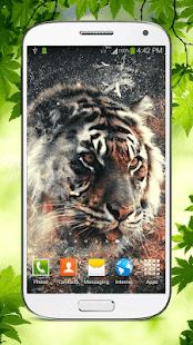Tiger Živé Tapety - náhled
