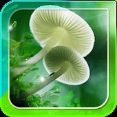 Mushroom Live Wallpaper