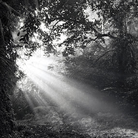 by Samuel Sitompul - Landscapes Forests ( lights, black and white, forest )