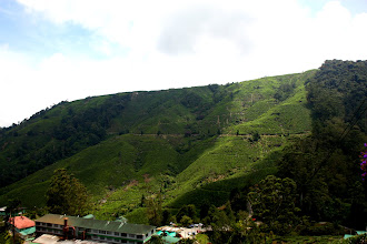 Photo: Year 2 Day 115 - Fantastic View of Boh Tea Estate from the Viewpoint  #3