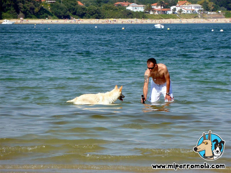 Playa para Perros en el Concello de Ares, Can de Palleiro, Border Collie