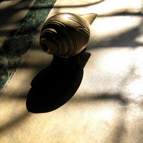 Sankha & Shadow........ by Dipan Chaudhuri - Novices Only Objects & Still Life