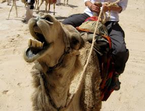 Photo: Это верблюдинг, детка