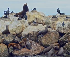 Photo: 40. Shortly after you're out on the water, the boat goes past a breakwater with all sorts of animals hanging out. Here you see some nesting cormorants and plenty of noisy sea lions.