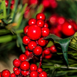 Holly Berries by Bonnie Davidson - Public Holidays Christmas ( holly, green, christmas, needles, round, holiday, circles, red, tree, ornament, celebration, artificial, shiny, berries, Christmas, card, Santa, Santa Claus, holidays, season, Advent,  )