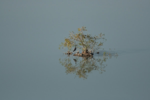 La terra  sospesa tra acqua e aria di bluebird