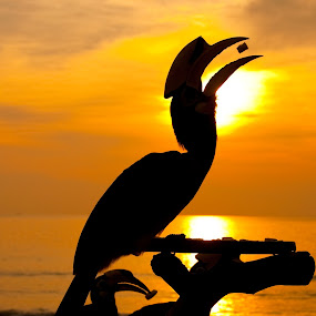 ah~~~~~~mm......... by Jordan Toh - Landscapes Sunsets & Sunrises ( hornbill, pwcotherworldly, silhouette, sunset, eating, sea, silhouette, yellow )