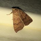 Bicolored Sallow Moth