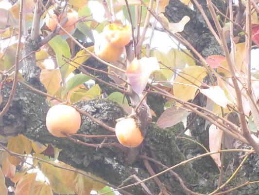 Colori d'autunno di emanuela_dolci