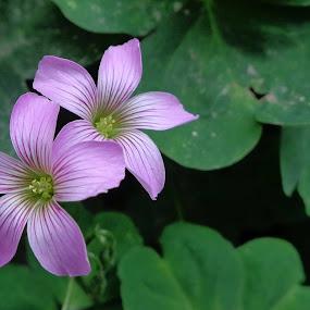 by Manash Kaushik - Flowers Flower Gardens