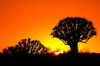 Photo: Sunset at the Quiver Tree Forest, Keetmanshoop, Namibia.  Quiver trees are actually a species of aloe, and are so named because locals traditionally used the branches to make quivers for their arrows.