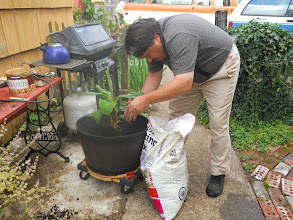 Photo: Finally getting my Caven in his third pot I previously made for him.
