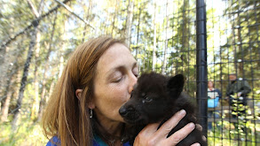 Leopards, Wolf Pups & Grizzlies, Oh My! thumbnail