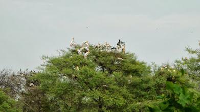 Photo: Im Vogelschutzpark
