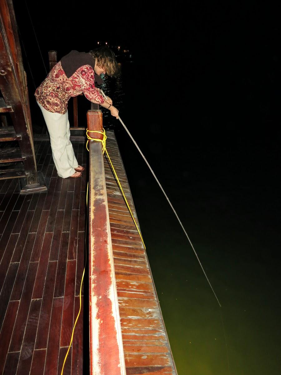 Night fishing for squids