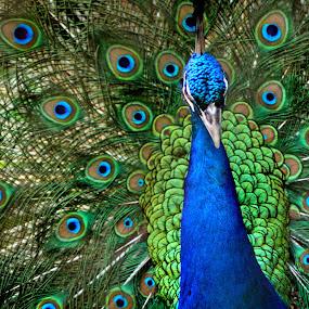 by Nadia Puteri Meutia - Animals Birds