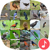 Appp.io - Thai Bird Sounds