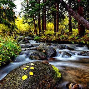 Colorado Rocky Mountain Creek in the fall by Antonio Lobato - Landscapes Waterscapes ( stream, waterscape, fall, rocky mountains, creek, colorado, long exposure, landscape,  )