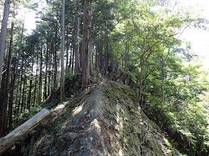 岩尾根(左を進む)