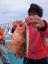 Photo: アラカブでした。 魚とあまり変わらないジグ。 「セカンドステージ」から近日発売される 「ヤイバプラス」でした!