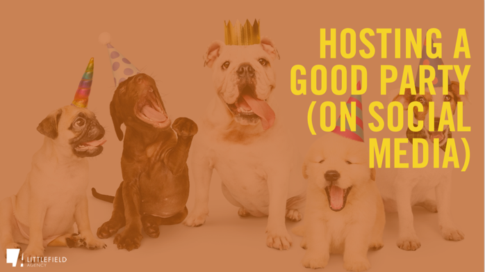 A group of dogs wearing party hats  Description automatically generated with medium confidence