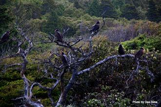 Photo: (Year 2) Day 356 - Turkey Vultures