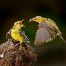by MazLoy Husada - Animals Birds