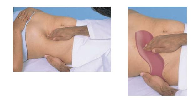 Palpação do fígado. Propedêutica médica. Battes, 11°ed.