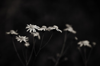 """Photo: """"I see your face in every flower...""""  +Monochrome Arty Club +Breakfast Club +Breakfast Art Club +PixelWorld #floralfriday by +Tamara Pruessner"""