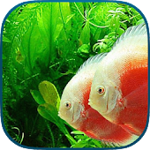 Fish Aquarium 3D - Fish Tanks