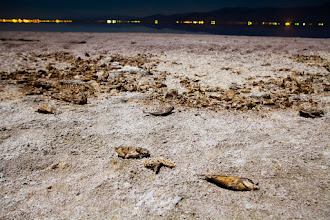 Photo: A Dead Fish Gains The Power Of Observation - Bombay Beach, CA