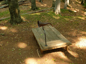 Photo: Naslouchadlo lesa.