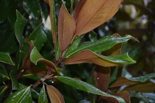 Pioggia e foglie di alessiag2473