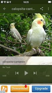Calopsitas de Pássaros offline - náhled
