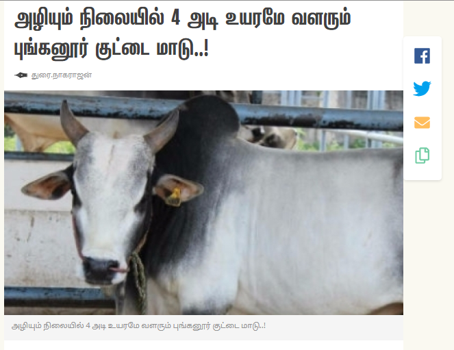 Cow 2A.png