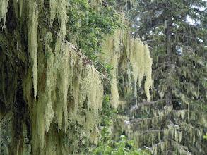 Photo: Moss art shot!