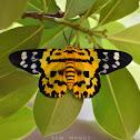 False Tiger Moth (Day-Flying Moth)