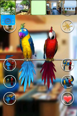 Talking Parrot Couple Free screenshots 1