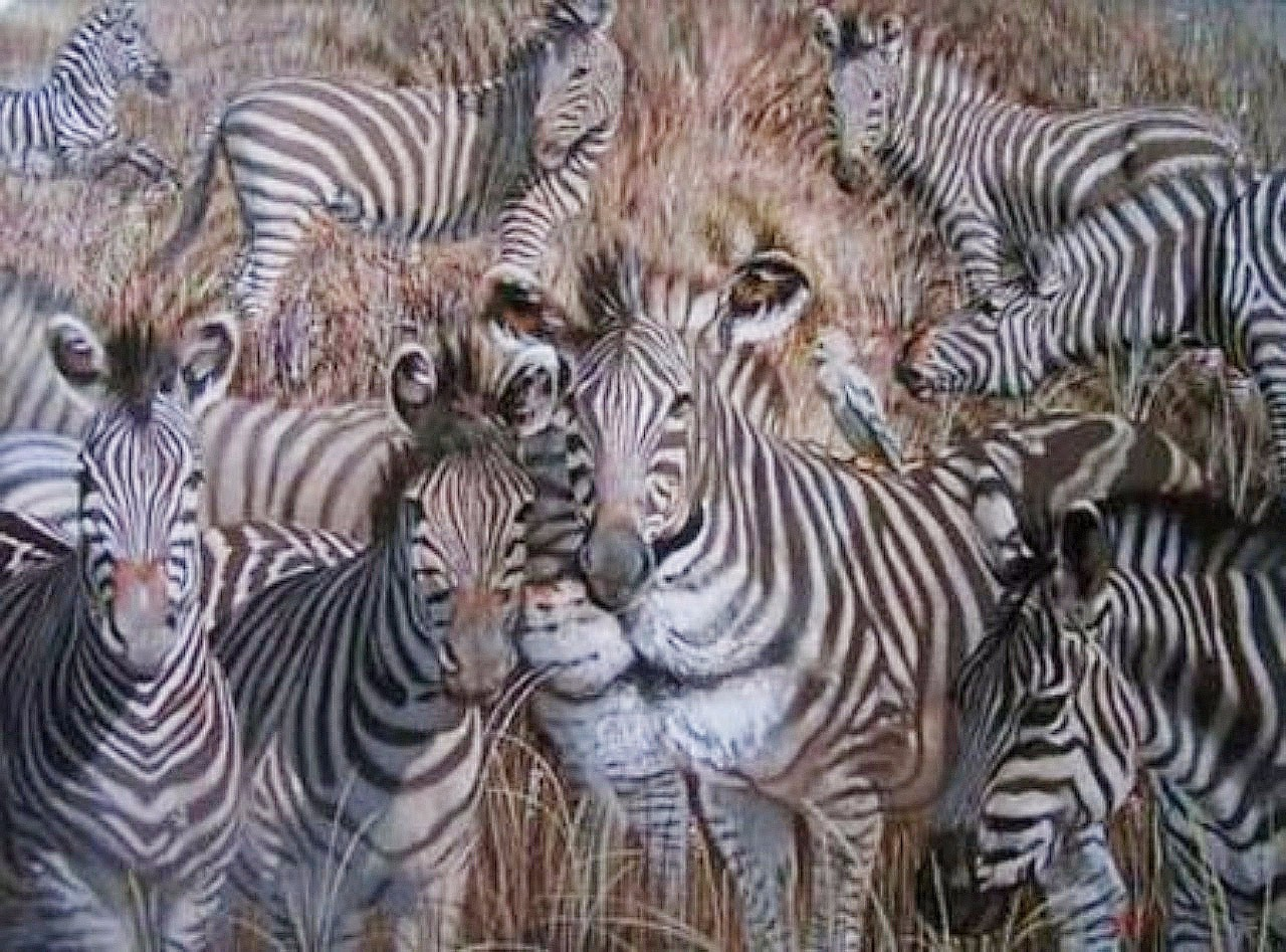 Image result for which animal see first lion zebra