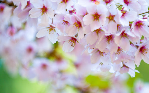 玩解謎App|拼图 - 春暖花开的季节免費|APP試玩