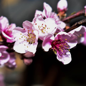 by Gabriela Gabriella - Flowers Flower Gardens