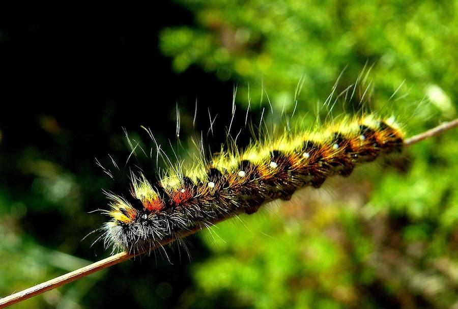 Caterpillar to Butterfly by Joaquim Machado - Animals Other