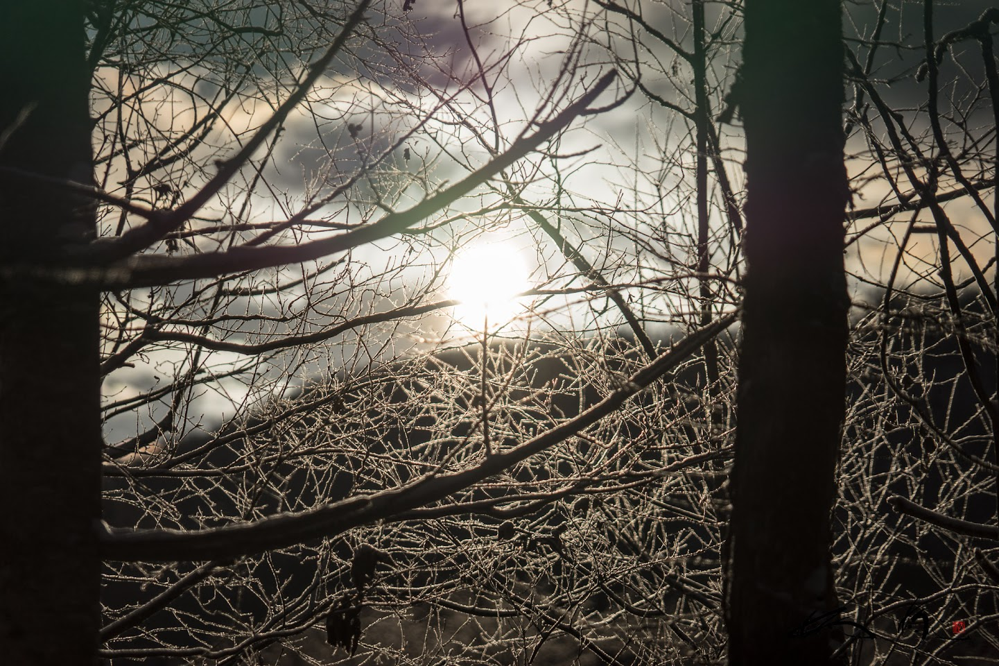 雪下出麦 ( ゆきわたりてむぎのびる )