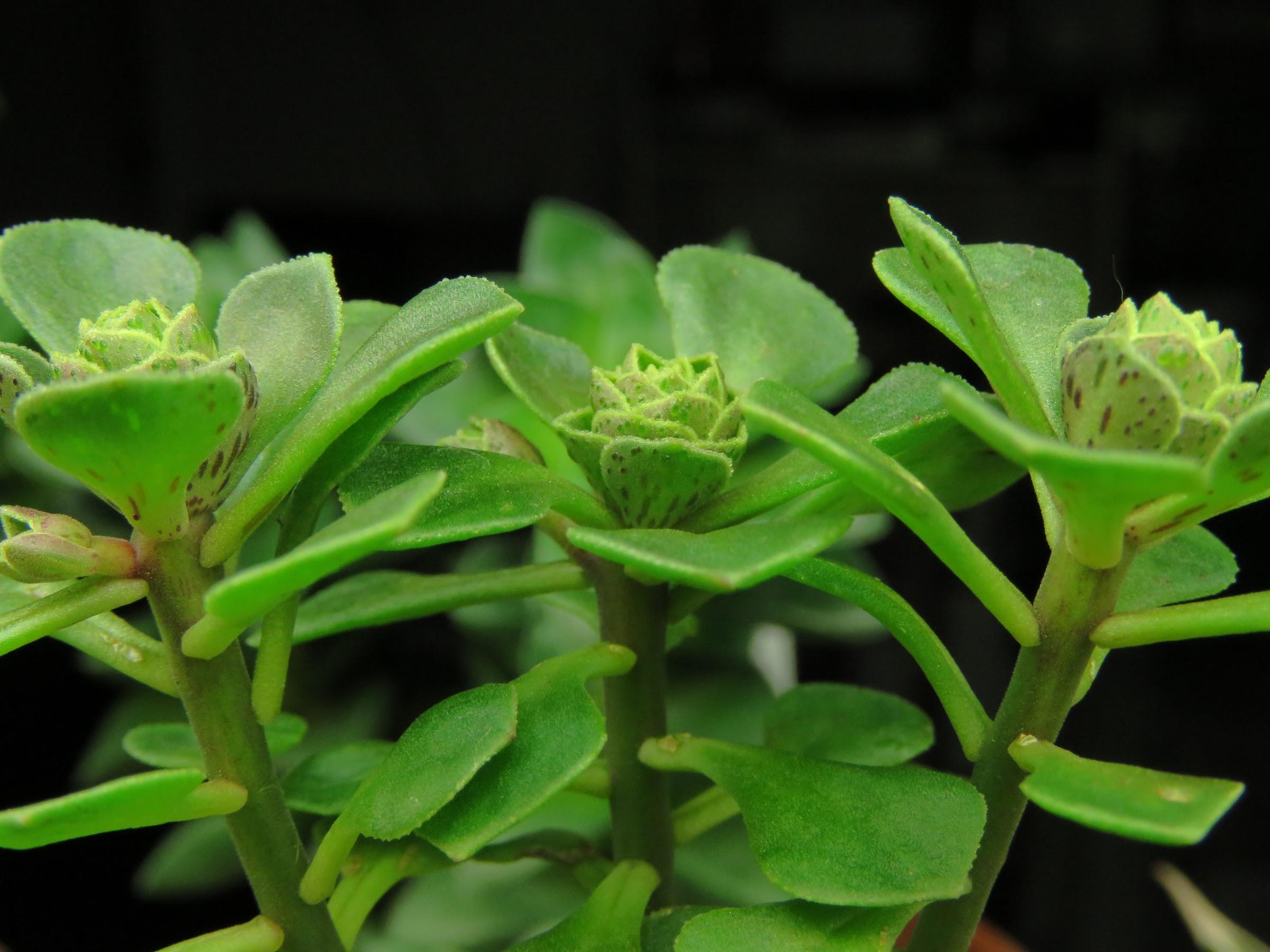 Mes petites plantes grasses et cactées - Page 6 LCHoycRAnM4dsvAOYJ6oajbtLMjTjFV_Lf1sKDCAgm4y2Vp4XBbZG8Wevjf_016Y5luIK-ZFXuyzd8Mb2Z8ivQkkY0yn_NJceD9OtSZmIvCVuZg1AXAX9R3dNTIizBLc71TYA8ceSZg=w2400