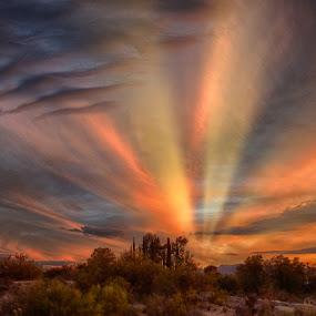Cypress Dowon by Charlie Alolkoy - Landscapes Sunsets & Sunrises ( desert, sunset, arizona, tucson, sunrise, rays )